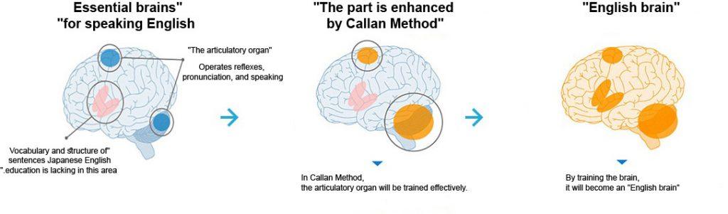 Entrena tu cerebro con metodo Callan