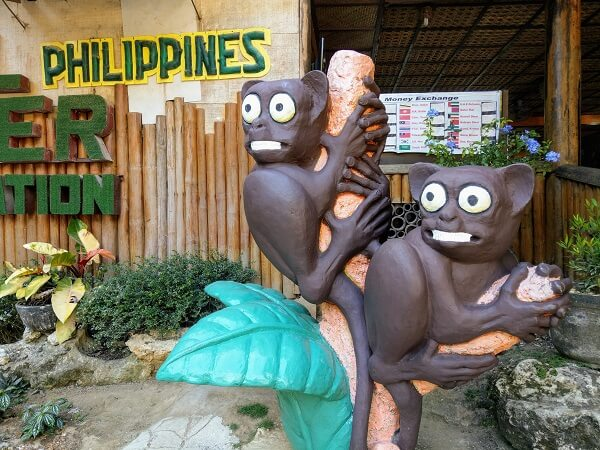 bohol tarsier hayvan